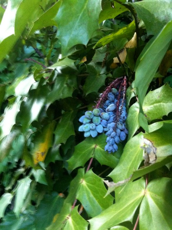 Blue Berries