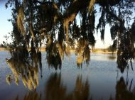 Spanish Moss_Middleton